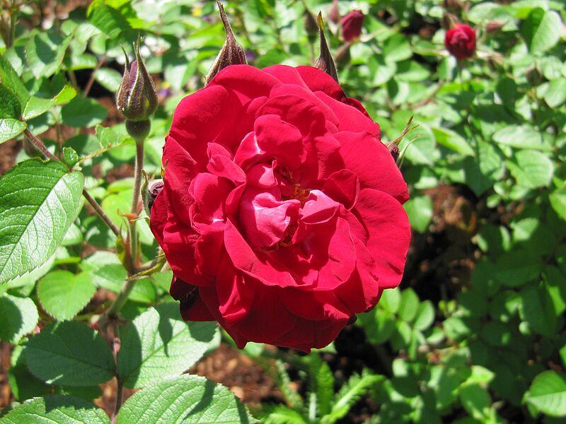 garden-2009-05-0679_std.jpg