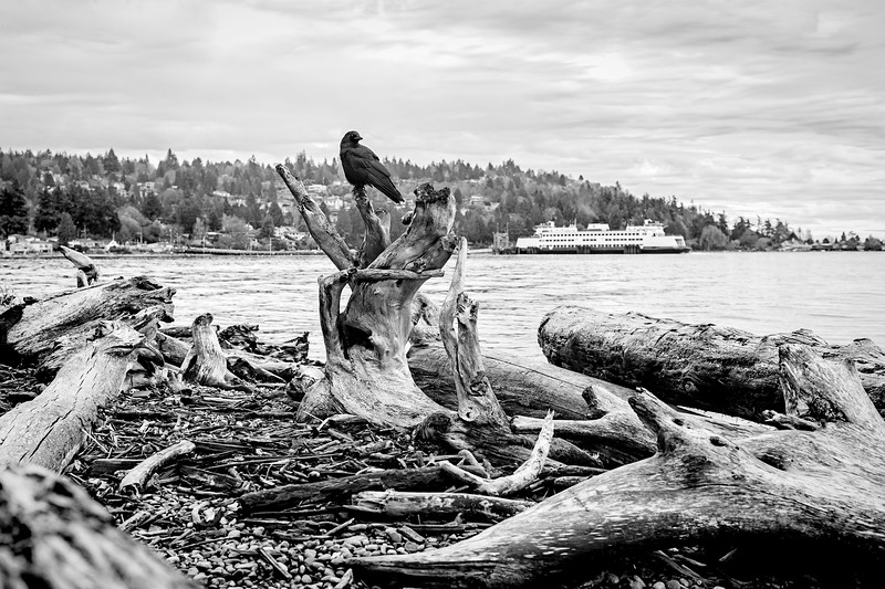 Crow with Vashon Island Ferry II