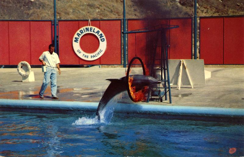 Porpoise Flaming Hoop Jump