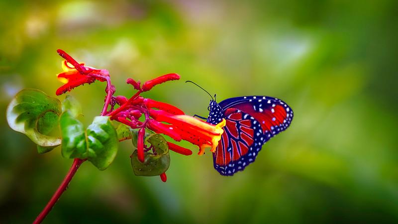 Butterfly-140.jpg
