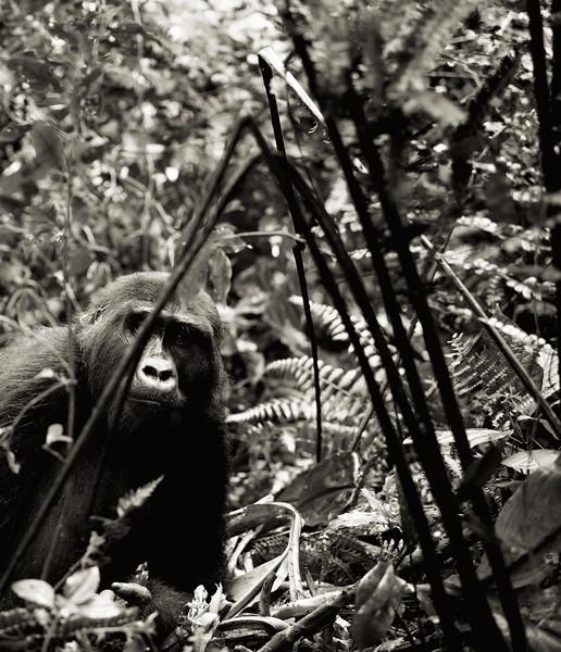Uganda_T_Gor-38.jpg