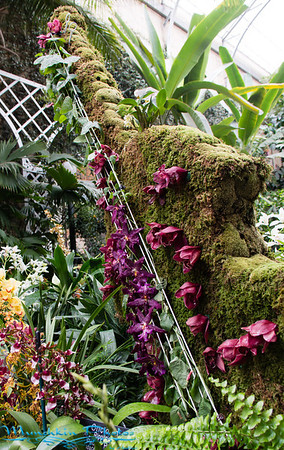 Orchids 2014