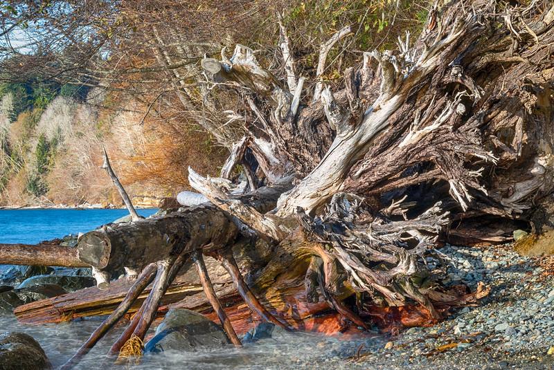 DriftwoodStumps.jpg