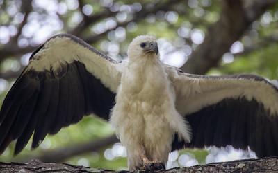 2019-12-20 Birding at Pasir Ris Park