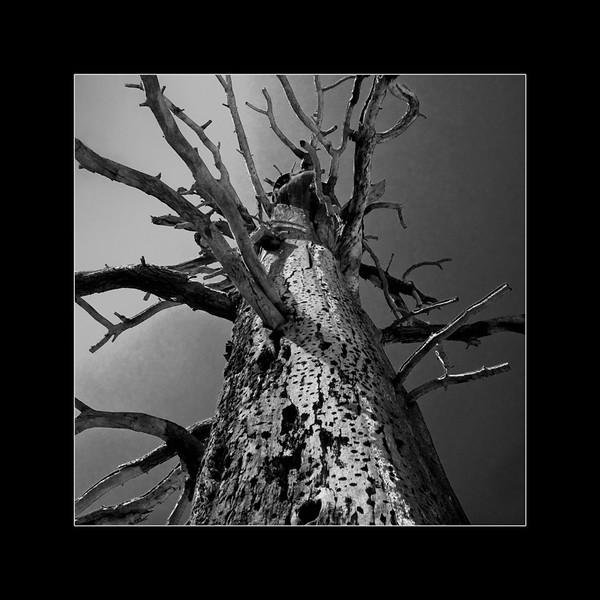 Looking Up a Tree.jpg