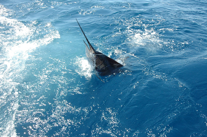 Los Sueños Marlin Invitational