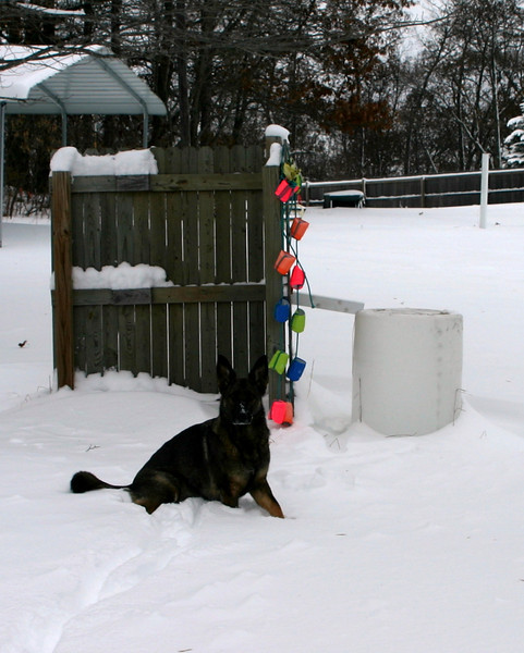 2009.12.9 Blizzard Brita yard (2).JPG