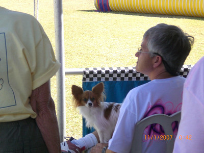2007 Barb Jones photos: USDAA Nationals Scottsdale dog agility