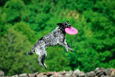 Yankee Flyers Dog and Disc Club May 2014