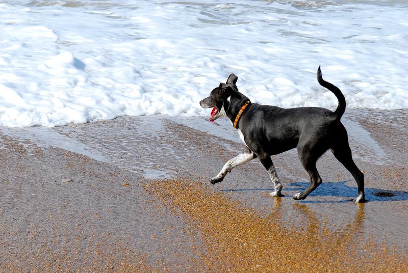dogs_beach-004.jpg