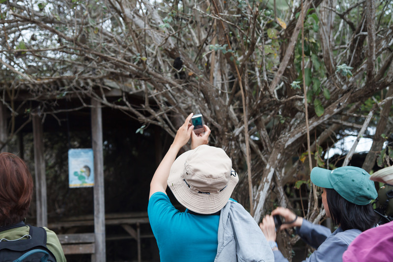 Photographing a Common Cactus-Finch at Santa Cruz, Galapagos, Ecuador (11-20-2011) - 570.jpg