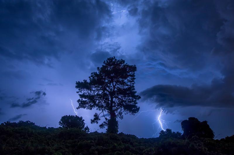 Electric Lone Tree