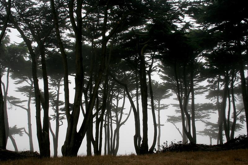 1771 Trees in Fog.jpg
