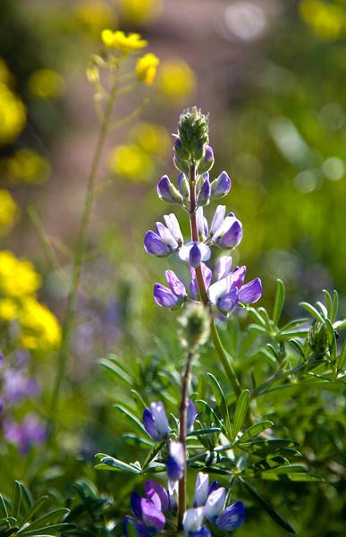 marin_wildflowers.jpg