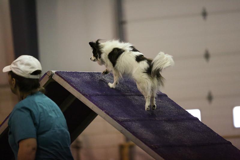 dogs_06142016-84.jpg