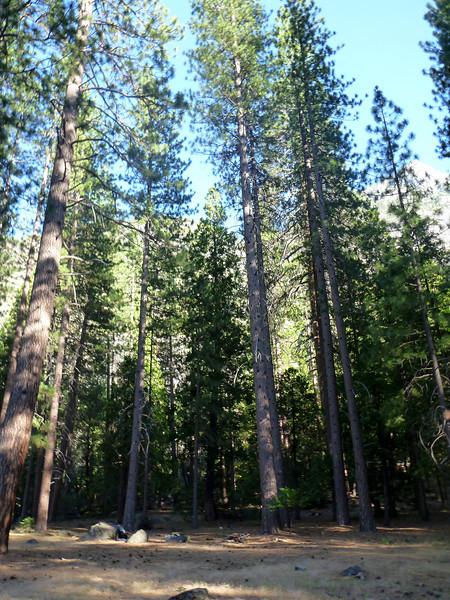 Pate Valley campsite.