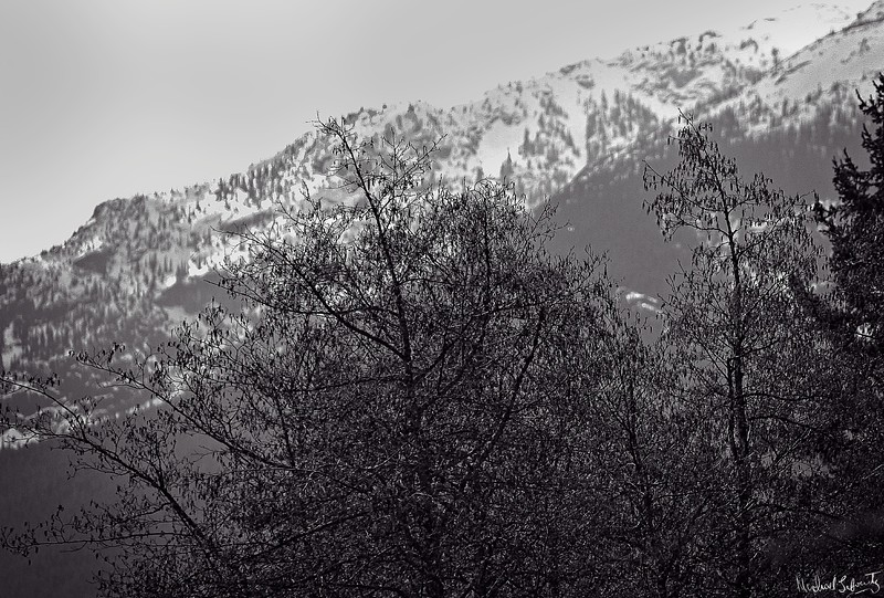 mountain ranghe with tree#3 IMG_0808.jpg
