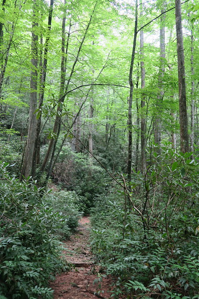 Thompson River Trail - 2,450'