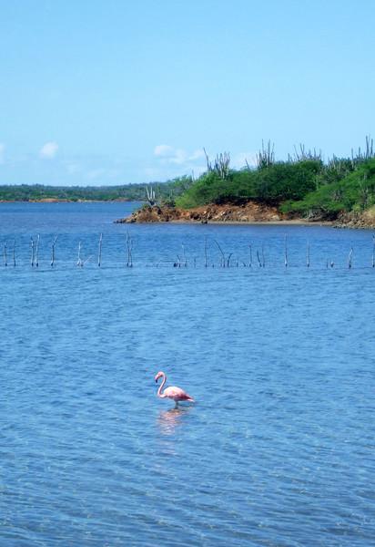 Goto Lake - Gotomeer - Flamingos
