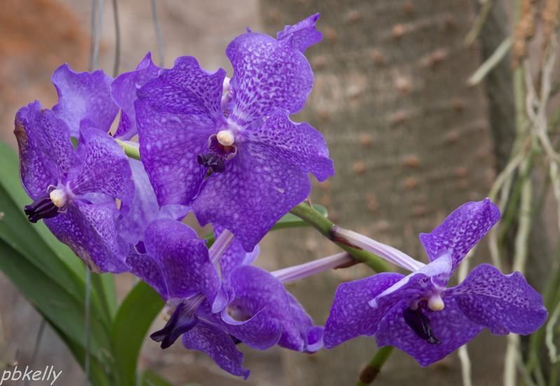 purple orchid 021614-3.jpg