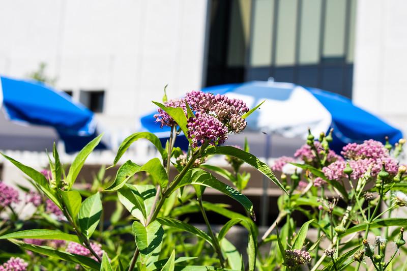 07_02_2019_Campus_Flowers_DSC_0168.jpg