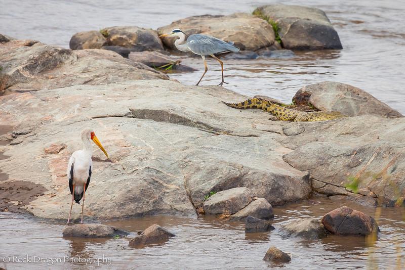 North_Serengeti-76.jpg
