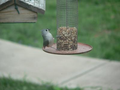 2006 Backyard