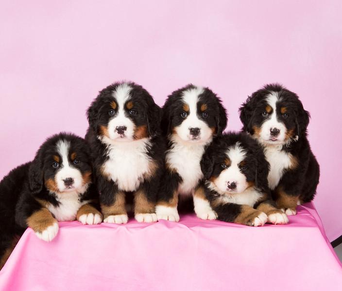 2013-Pearson Pups-Jun02-0299-2.jpg