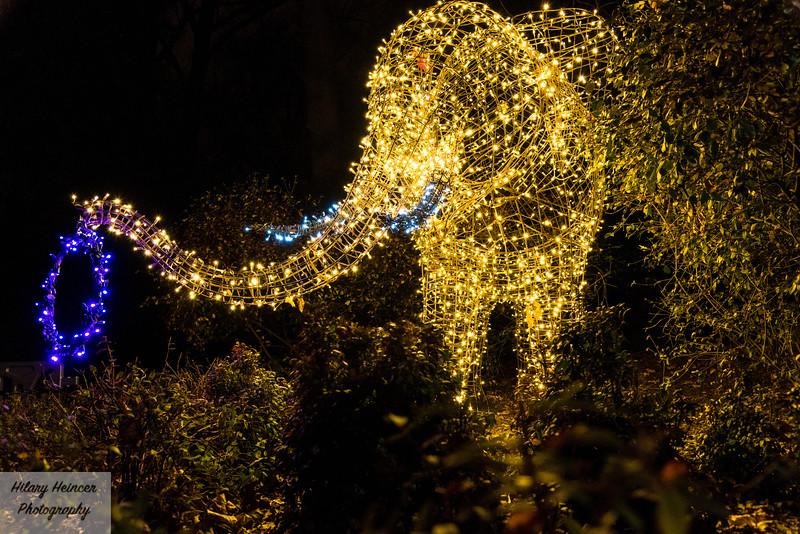 Christmas Lights-141.jpg