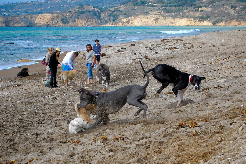 dogs_beach-048.jpg