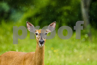 things-to-consider-when-establishing-a-food-plot-for-whitetailed-deer