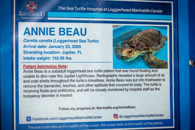 Annie Beau turtle release