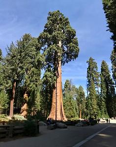 Southern Sierra 2017