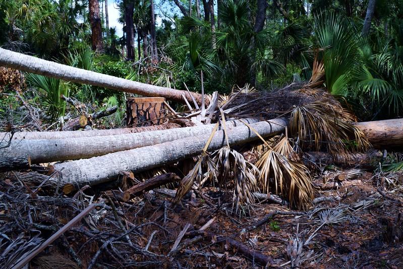 039a Timber 4-26-17.jpg