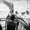 Pelican Rescue 7