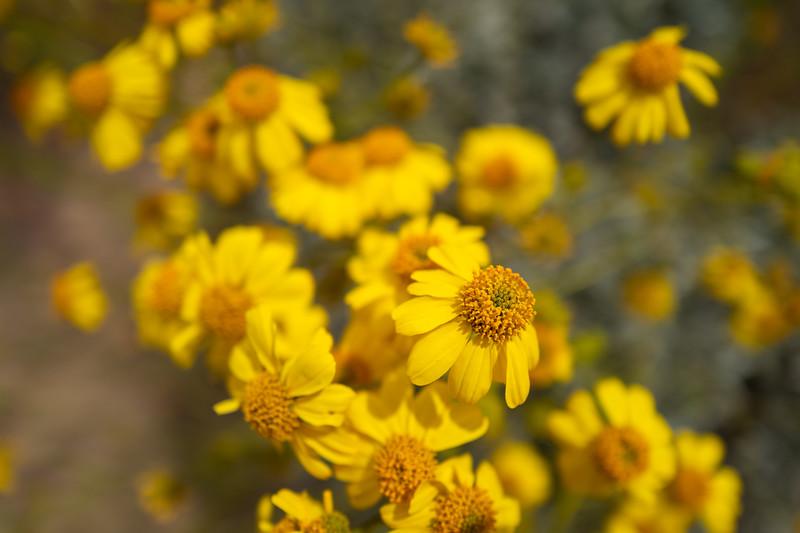 Spring Flowers A-70.jpg