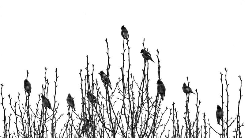 BWbirdnotes-1.jpg