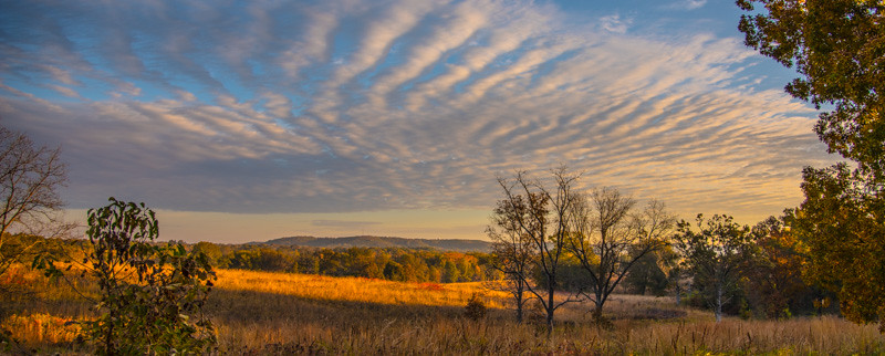 Autumn Field 13