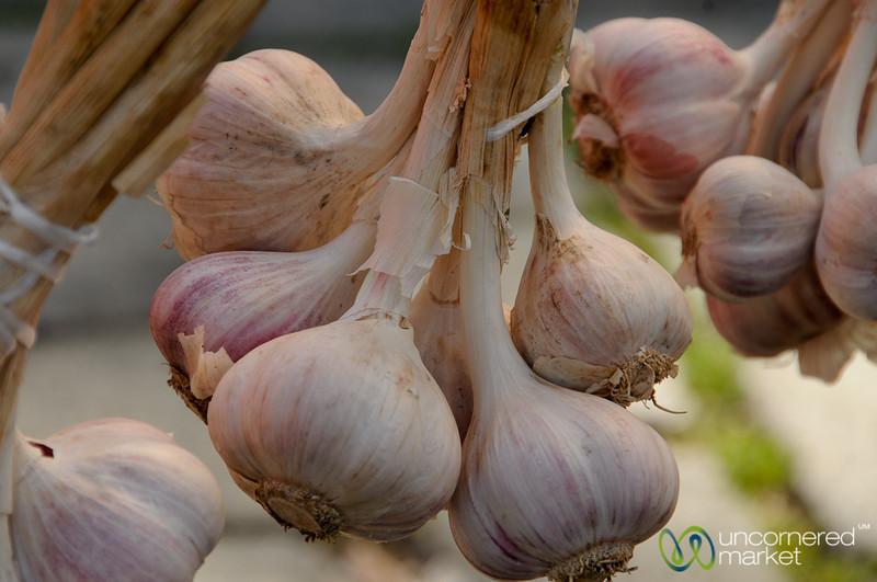 Up Close with Fresh Garlic - Prague, Czech Republic