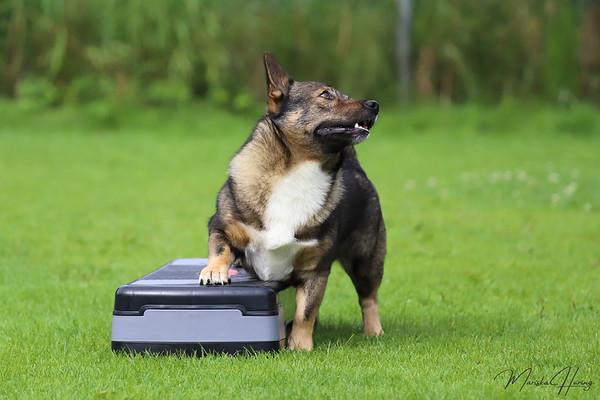 Dogdance foto- en videoshoot augustus 2021