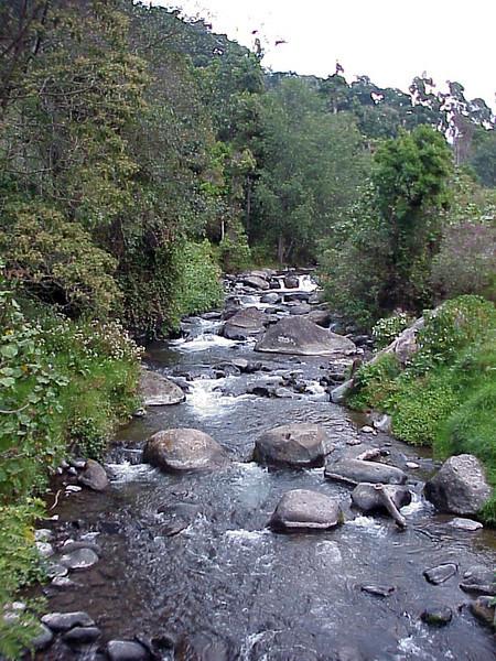 Savegre River at Savegre Mountain Lodge Costa Rica 2-14-03 (50898263)