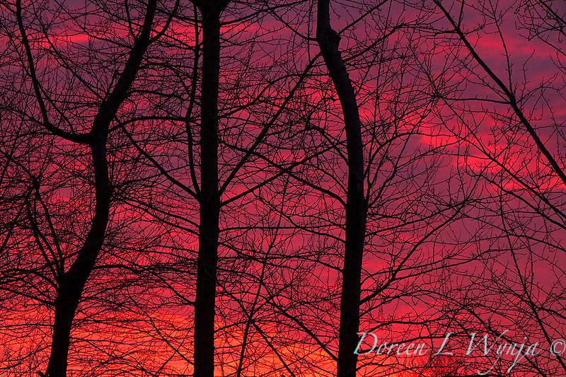 Fire in the sky Sunset_0119.jpg