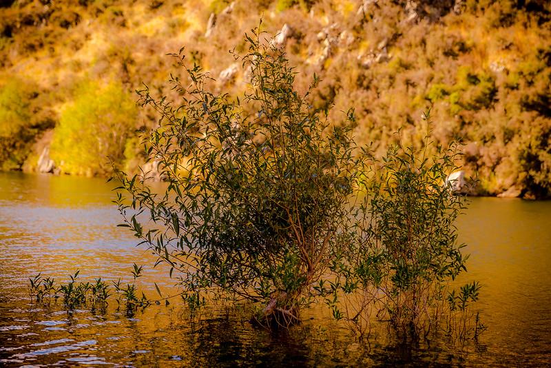 Baum im Wasser des «Deep Creek» in der Abendsonne