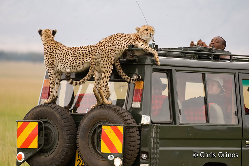 Masai Mara | Kenya