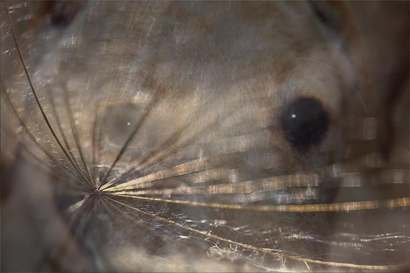 Gus- Puppy Eyes