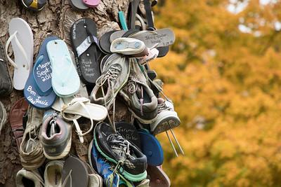 Shoe Tree Fall 2018