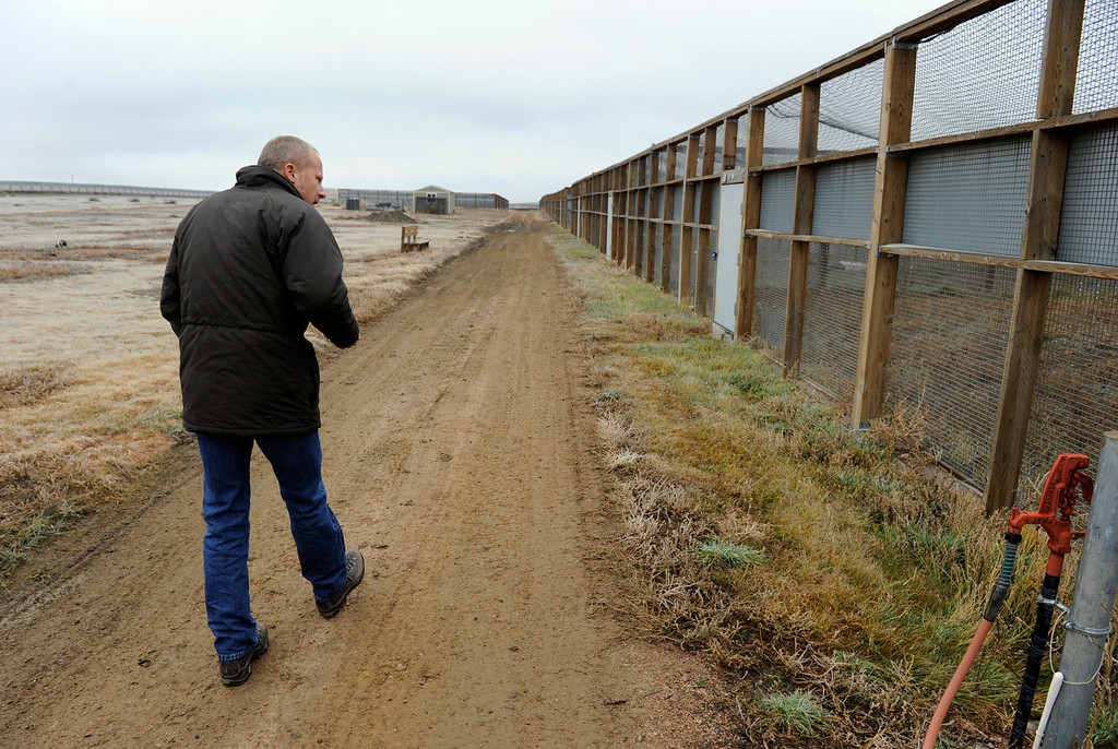 . WELLINGTON, CO - Oct. 29: Wildlife biologist John Hughes walks along the outdoor pre-conditioning pens that house some ferrets. Each pen is 40\'x40\' and the animals stay in the pens a minimum of 30 days and must kill at least two prairie dogs on their own in that time frame. The U.S government through the U.S. Fish and Wildlife Service is breeding the black-footed ferret in captivity in northern Colorado. Restoring the ferrets, an endangered species, to the United State prairies is considered a key step in to reviving dying ecosystems. (Photo By Kathryn Scott Osler/The Denver Post)