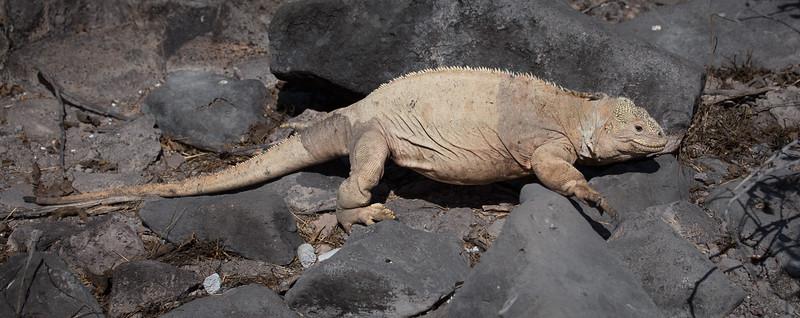 Galapagos_MG_4844.jpg
