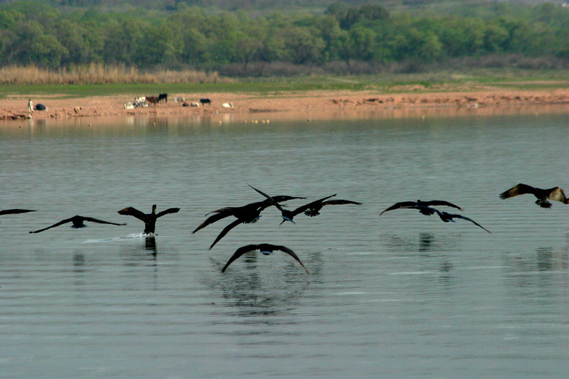 Birds on the lake.
