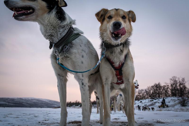 Dog Mushing-9917.jpg